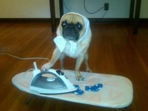 Giới trẻ - Clip: Chó thông minh tự biết làm việc nhà