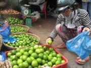 Giá cả - Thương lái ngừng mua, người trồng chanh khóc ròng