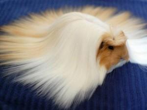 """Phi thường - kỳ quặc - Ngạc nhiên với những bộ lông cực """"dị"""" của động vật"""