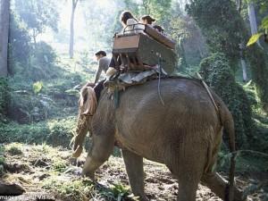 Tin tức trong ngày - Thái Lan: Quật chết quản tượng, voi cõng du khách vào rừng