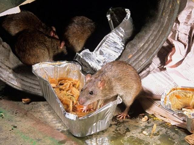 Bị chuột cắn bệnh nhân phải nhập viện cấp cứu - 2