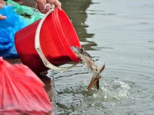 Ốc, hến, lươn, trạch... nổi đầy hồ ngày lễ Vu Lan
