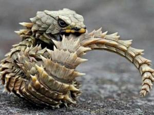 Phi thường - kỳ quặc - 10 sự kết hợp kỳ lạ nhất trong thế giới động vật