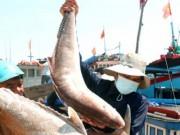Thị trường - Tiêu dùng - Hải sản miền Trung: Lại điệp khúc được mùa, rớt giá