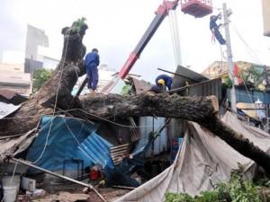 Tin tức trong ngày - Cây cổ thụ đè sập cửa hàng, quán cơm trước ga Sài Gòn
