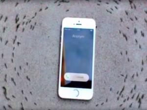 Phi thường - kỳ quặc - Tranh cãi với clip đàn kiến nghe nhạc chuông Iphone 6