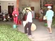 Thị trường - Tiêu dùng - Thương lái lại lùng sục cau non bán sang Trung Quốc