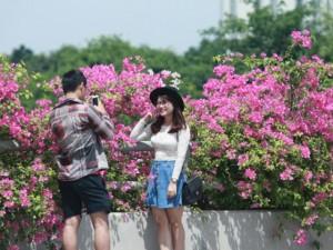 Bạn trẻ - Cuộc sống - Giới trẻ mê mẩn chụp ảnh cùng hoa giấy đẹp rực rỡ