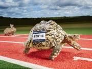 """Thể thao - Kỷ lục lạ: Rùa """"Usain Bolt"""" chạy nhanh nhất thế giới"""