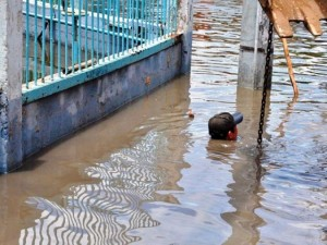 Tin tức trong ngày - Ảnh: Dân TP.HCM khốn khổ vì nước ngập