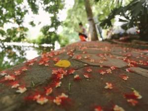 Tin tức trong ngày - Ảnh: Hà Nội đẹp dịu dàng trong nắng sớm mùa thu