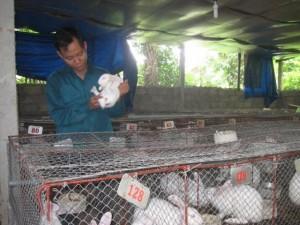 Bạn trẻ - Cuộc sống - Cử nhân văn chương chọn chăn nuôi thỏ kiếm tiền tỷ