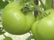Sức khỏe đời sống - Hợp chất trong táo và cà chua xanh giúp giảm teo cơ