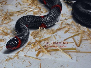 Phi thường - kỳ quặc - Video: Phát hoảng chạm mặt rắn 3D như thật