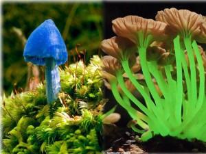 Chuyện lạ - Những loài nấm quý hiếm và kỳ lạ nhất trên thế giới