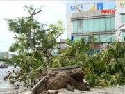 Video An ninh - 500 cây xanh gãy đổ, bật gốc ở Đà Nẵng có phải do bão?