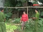 Bản tin 113 - Phát hiện vụ trồng cần sa như… rau trong vườn nhà