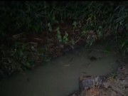 Video An ninh - Tiền Giang: Nghi án giết người, vứt xác dưới mương nước