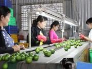 Thị trường - Tiêu dùng - Trái cây đặc sản Việt vào Mỹ, Nhật
