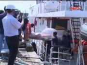 Video An ninh - Tìm thấy thêm một thi thể vụ nổ tàu cá ở biển Vũng Tàu