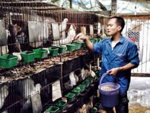 Bạn trẻ - Cuộc sống - Chàng trai 8x làm giàu từ nuôi động vật hoang dã