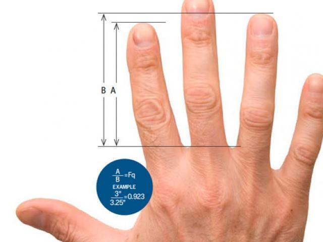 Độ dài của ngón tay nói gì về tính cách và sức khỏe của bạn?