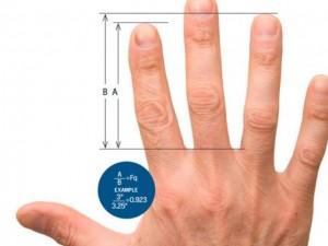 Sức khỏe đời sống - Độ dài của ngón tay nói gì về tính cách và sức khỏe của bạn?