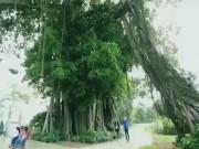 Du lịch - Đến Tam Nông nghe hát Ghẹo