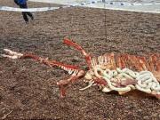 Phi thường - kỳ quặc - Phát hiện xác quái vật hồ Loch Ness?