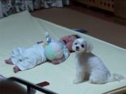 Bạn trẻ - Cuộc sống - Clip: Phản ứng đáng yêu của chó cưng khi thấy bé khóc