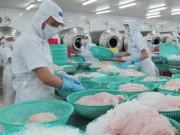 Thị trường - Tiêu dùng - Kiểm tra 100% lô hàng cá tra xuất khẩu sang Mỹ