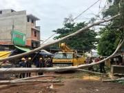 Video An ninh - Cây đổ sập nhà dân, quật trúng người đi đường