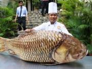 """Tin tức trong ngày - Cá hô nặng gần 130kg """"bơi"""" từ Biển Hồ về Sài Gòn"""