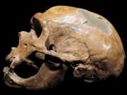 Phát hiện tộc người ăn thịt lẫn nhau 40.000 năm trước