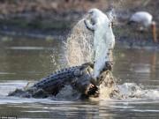Thế giới - Rùng mình với cảnh cá sấu khổng lồ xé xác đồng loại