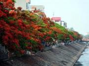 Tin tức trong ngày - Chuyên gia Nguyễn Lân Hùng: Hà Nội rất phù hợp trồng phượng