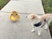 """Công nghệ thông tin - 1001 tình huống xuất hiện """"khó đỡ"""" của Pokémon"""
