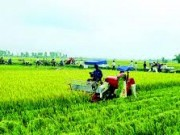 Thị trường - Tiêu dùng - Nhật tăng mạnh đầu tư vào nông nghiệp