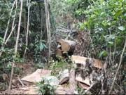 Tin tức trong ngày - Bộ CA mật phục lâm tặc ở Lâm Đồng: Bắt giữ 12 đối tượng
