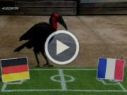 """Bóng đá - """"Nhà tiên tri"""" xuất sắc nhất Euro: Điềm may cho Pháp"""