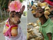 """Bạn trẻ - Cuộc sống - Chó mặc váy, quàng khăn bán hàng """"đắt như tôm tươi"""""""
