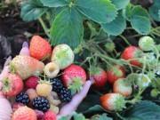 Bạn trẻ - Cuộc sống - Mê mẩn vườn rau quả xanh mướt của mẹ Việt ở Hà Lan