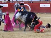 Thể thao - Kinh sợ bị đâm vào ngực: Võ sĩ đấu bò bỏ mạng
