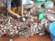 Thị trường - Tiêu dùng - Vì sao xuất khẩu thực phẩm an toàn, trong nước lại ăn đồ bẩn?