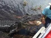 Phi thường - kỳ quặc - Video: Mạo hiểm sờ đầu cá sấu giữa đầm lầy