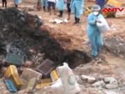 Video An ninh - Phát hiện hơn 1 tấn gà lậu chết, bốc mùi hôi thối