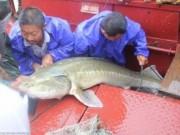 """Thế giới - TQ: Bắt được cá thuộc loài """"cùng thời với khủng long"""""""