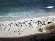 Thế giới - 70 cá voi dạt bờ bí ẩn ở Chile
