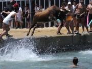 Thể thao - Cạn lời: Chán đấu bò trên cạn, lôi bò xuống nước