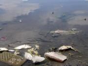 Tin tức trong ngày - Hà Nội: Cá chết trắng hồ Ba Mẫu